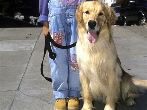 the dog from full house 6 famous dogs worthy of heaven abc news