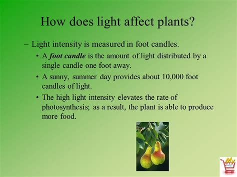 does the color of light affect plant growth does the color of light affect plant growth 28 images