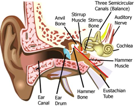 diagram of ear canal with wax psych senses