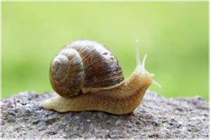 hewan  lambat  dunia