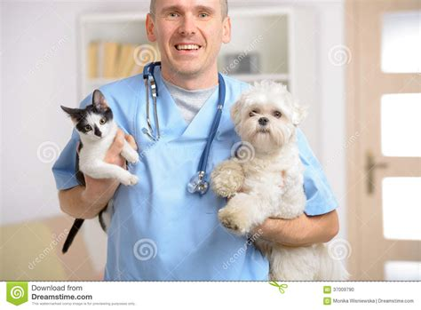 happy vet with and cat stock photo image of