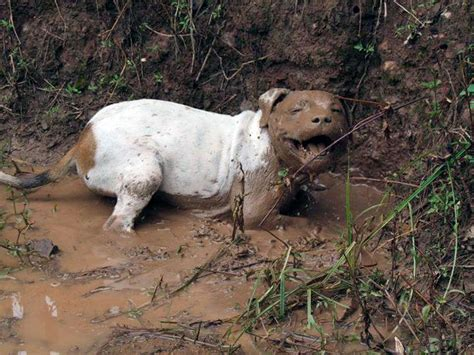 mud dogs 10 reasons you should never let your play in the mud bored panda