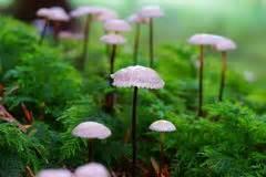 Kleine Graue Pilze Im Garten by Kleine Pilze Auf Rasen Stockfoto Bild 42314370