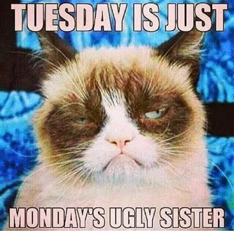 Tuesday Memes Funny - 115 best images about grumpy cat on pinterest grumpy cat