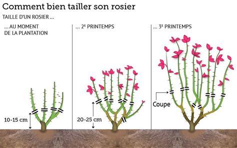 Comment Tailler Rosier Buisson by Au Jardin Ce Week End 224 Vos S 233 Cateurs Comment Et Fils