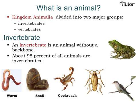 definition of animal biology animal kingdom