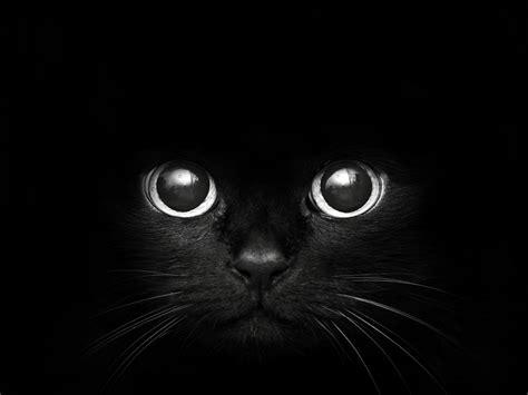 wallpaper dark cat black cat sweet hd desktop wallpapers 4k hd