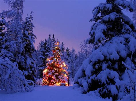wallpaper christmas trees wallpapers