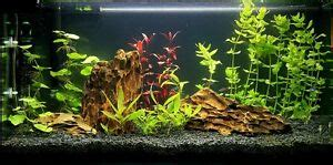 Aquascaping Stones For Sale by 10 Kg Rock Aquarium Iwagumi Style Set Of