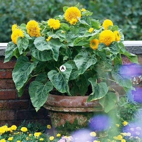 planters sunflower seeds free planters sunflower seeds woodworking projects plans