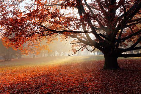 beautiful fall 4k hd desktop wallpaper autumn park foliage foggy 4k nature 3526