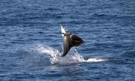 deep sea fishing boats near me fishing charters deep sea fishing charters fishing