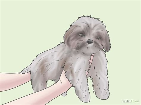 best way to potty a shih tzu trouble potty shih tzu for in the dreamhouse