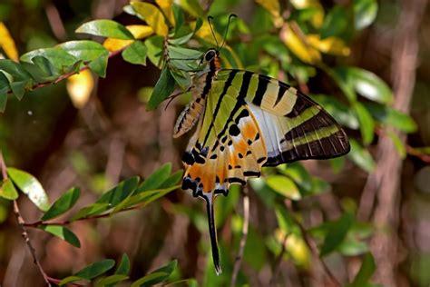 closeup zoom wallpaper desktop images nature macro insectsbutterflywild life