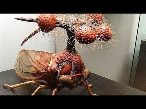 dibujos mas realistas del mundo los insectos mas raros del mundo top 10 youtube