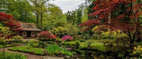 japanse tuin planten kopen natuurlijke japanse tuin tuintuin