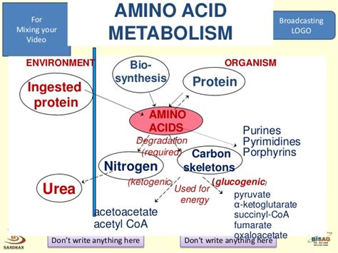 protein metabolism metabolism protein and
