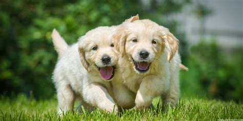 two puppies two puppies high definition wallpapers high definition backgrounds