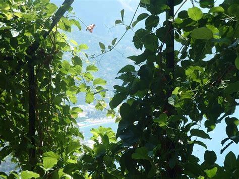 giardino dei limoni ravello photogallery giardino dei limonigiardino dei limoni