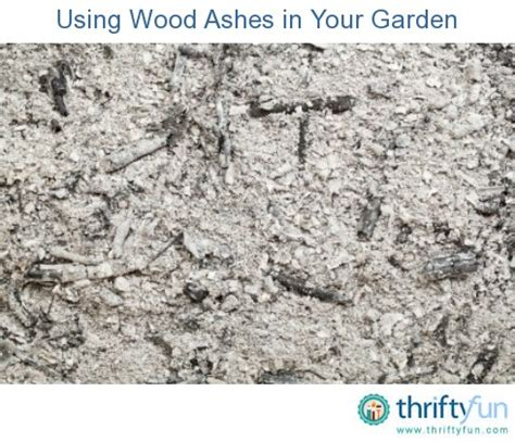 Wood Ashes In Garden by Using Wood Ashes In Your Garden Thriftyfun