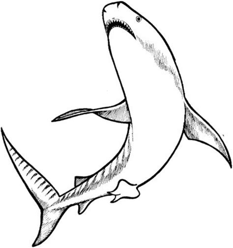 shark fin coloring page 17 best images about sharks on pinterest shark fin
