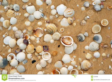 shells   sand royalty  stock  image