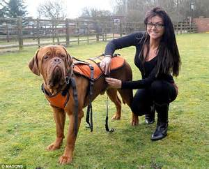 can dogs get aids aids support harness zoomadog for canine hip