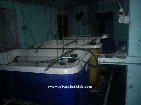 Jual Bibit Ikan Sidat Di Yogyakarta jual benih ikan sidat dan benih benih ikan