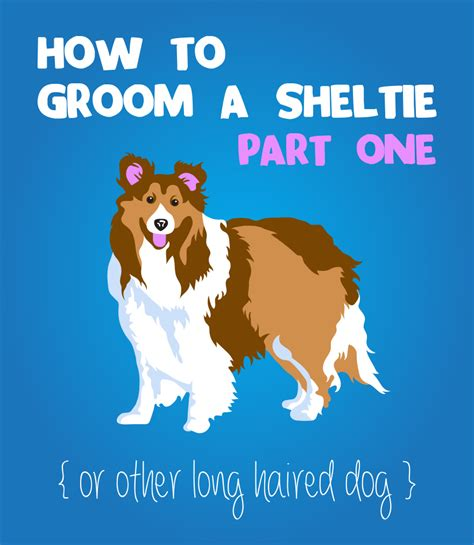 how to groom a how to groom a sheltie or haired part 1 the crafty designer