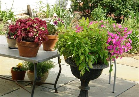 Best Plants For Patios by Maryland Gardening The Best Plants To Use Around A Patio