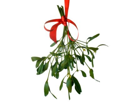 images of christmas mistletoe christmas traditions mistletoe the history museum of