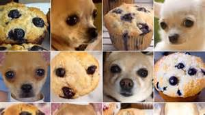 puppy not or move dress the or food meme will your minds screener