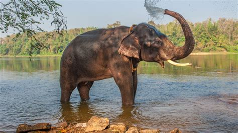 Animal Indian top 10 animals to see in india world safaris