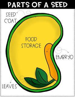 Parts Of A Seed Diagram