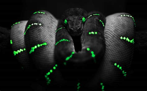 wallpaper ular hitam gambar gambar 3d keren dengan nuansa gelap