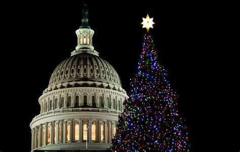 dc christmas trees beginning to look a lot like photos the big picture boston