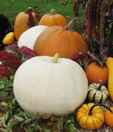 How To Preserve Pumpkins Until Halloween - different types of pumpkin and gourds my wedding