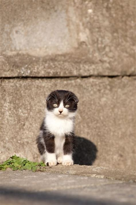cat island in japan cat heaven island in japan animals