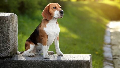 top dog breeds most popular dog breeds worldwide dog breeds picture