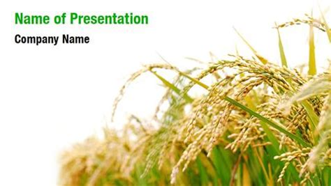Ppt Templates For Rice | rice paddies powerpoint templates rice paddies