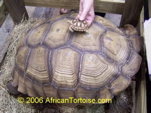 how should a tortoise heat l be on island turtle and tortoise rescue