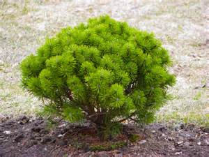 small bushes for landscaping images of trees in landscape design transplanting of