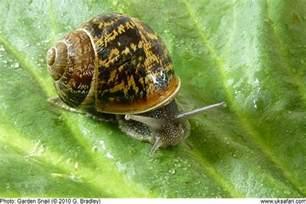 snail rescue no experience keeping snails petsnails forum