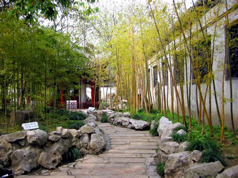 backyard bamboo garden bamboo contemporary landscape and landscape architects on