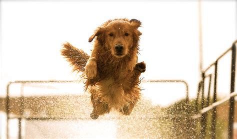 puppy jumping file jump jpg wikimedia commons