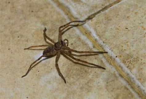 natural spider repellent diatomaceous earth