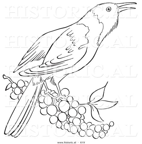 free baltimore oriole coloring pages