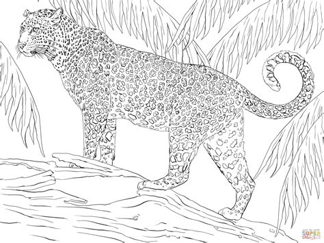 jaguar coloring page free printable coloring pages