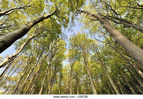 nienhagen germany trees nienhagen stock photos nienhagen stock images alamy
