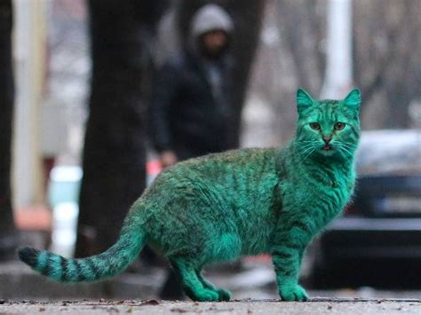 bulgarian chat room the mystery of bulgaria s green cat is finally explained hawkins right wing news